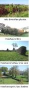 Photos présentant différentes formes de haies : taillées ou non, hautes, basses, ondulées