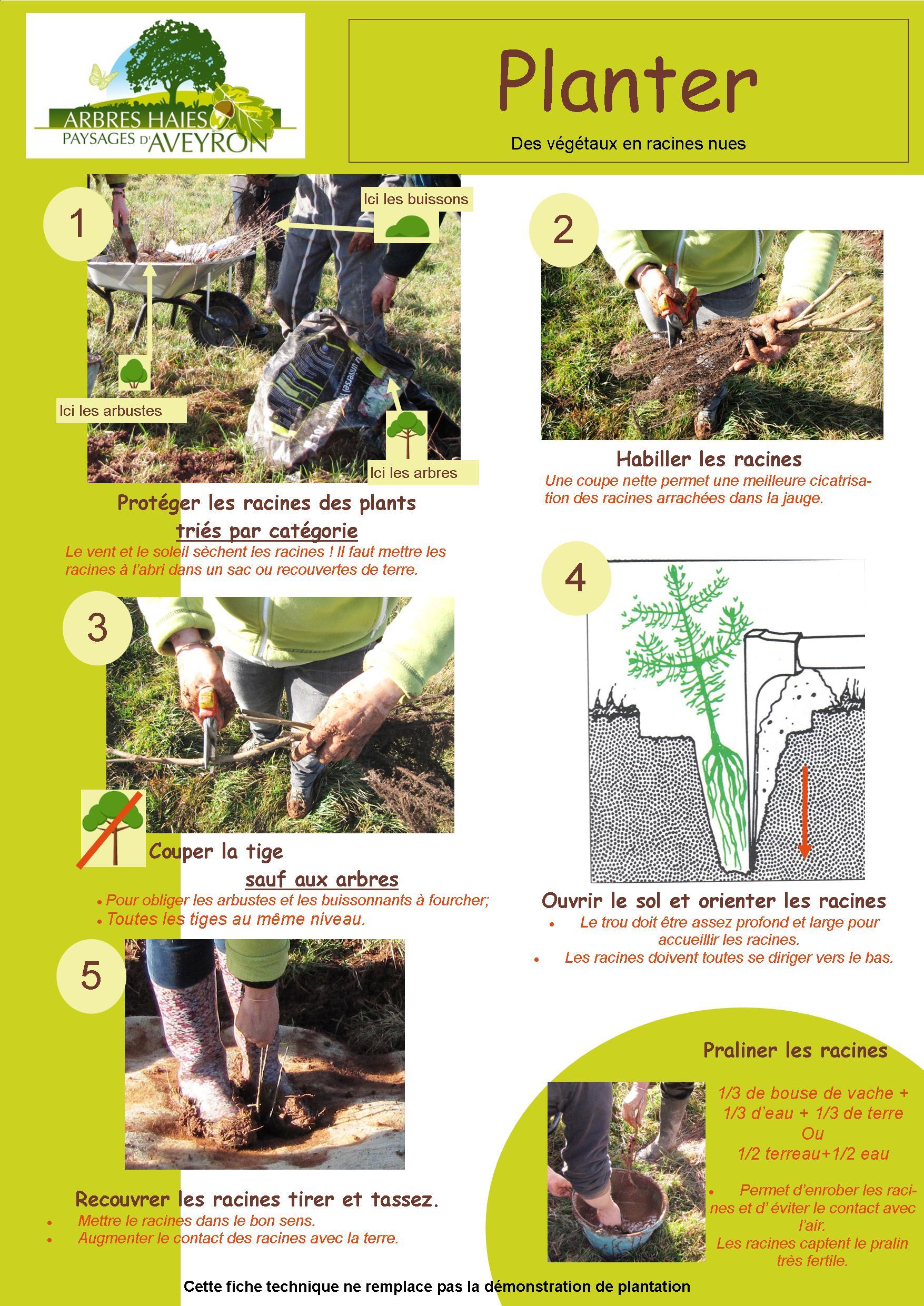 technique travaux plantation
