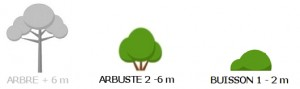 Arbuste+Buisson_ok