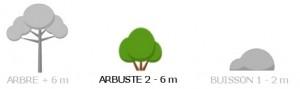 Arbuste_ok
