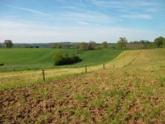 ligne d'arbre en plein champs